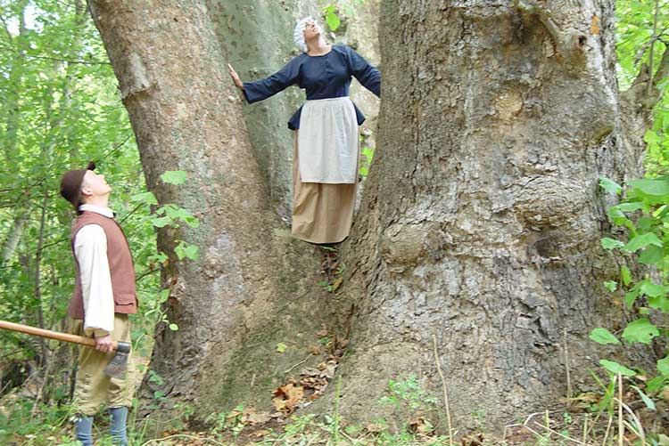 Giant, Hollow Sycamore Trees Often Provided Pioneers With Shelter.